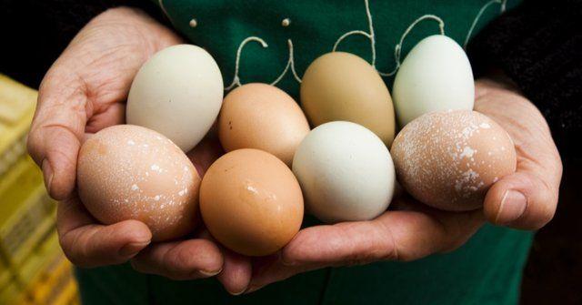 Principais tipos de ovos