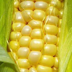 Afogado de Milho Verde
