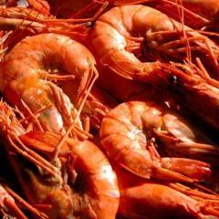 Coquetel de Frutos do Mar