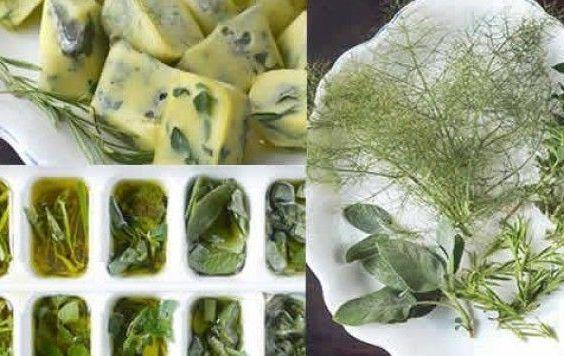 Formas para conservar ervas
