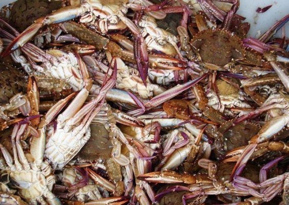 Maneiras para servir ostras e lagostas
