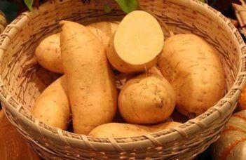 Importância da batata doce para saúde